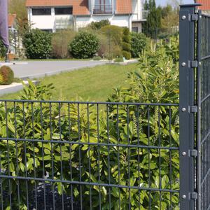 Czym obsadzić ogrodzenie?