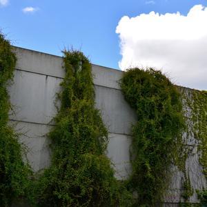 Kiedy zdecydować się na ogrodzenie gładkie?
