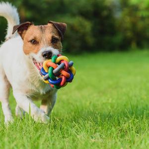 Zabezpieczenie ogrodzenia przed psem