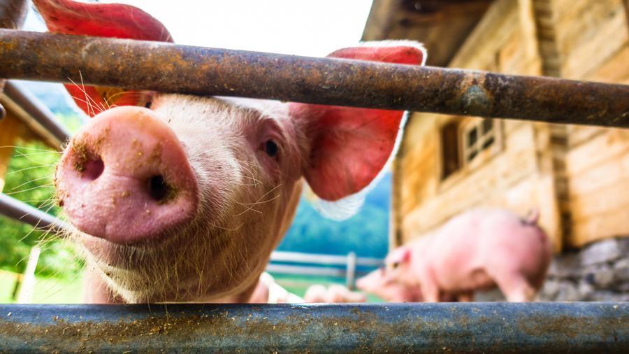 Ogrodzenie gospodarstwa – czym kierować się przy jego wyborze?