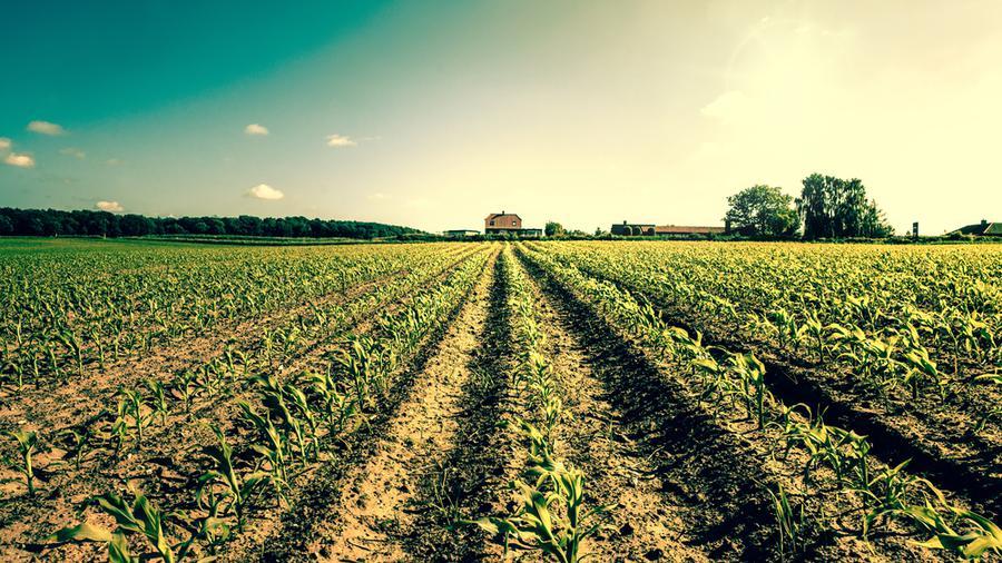 Jakie ogrodzenie pola uprawnego wybrać?