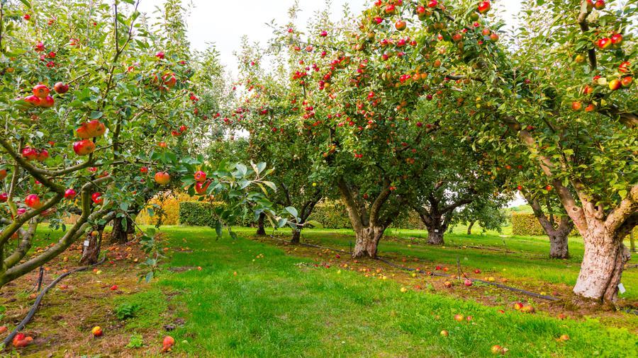 Dlaczego warto zdecydować się na ogrodzenie sadu i jak wybrać najlepsze?