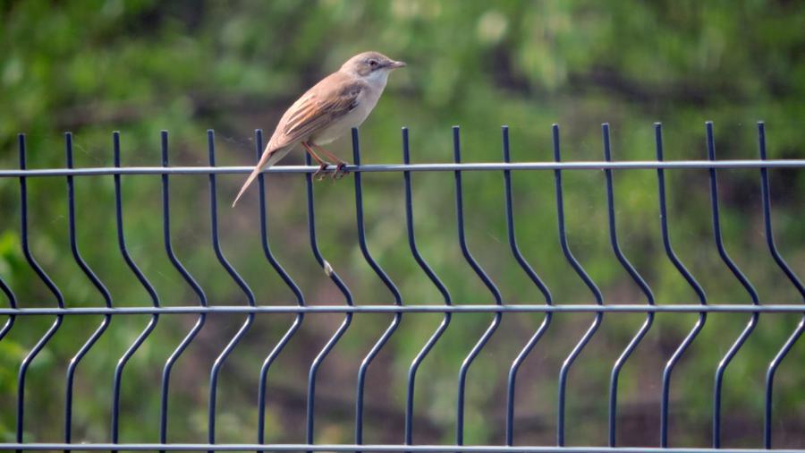 Wielofunkcyjna osłona na ogrodzenie panelowe