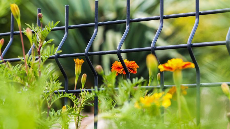 Co posadzić wzdłuż ogrodzenia?
